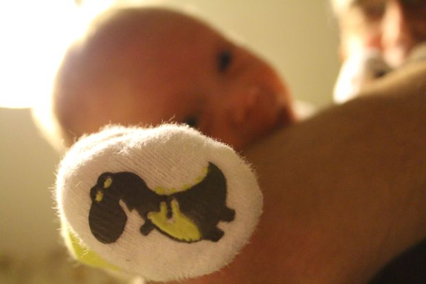 Finn T-rex sock
