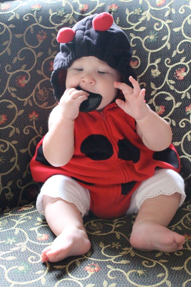 Or a lens cap-eating ladybug…you're up for whatever  we decide to dress you up in.